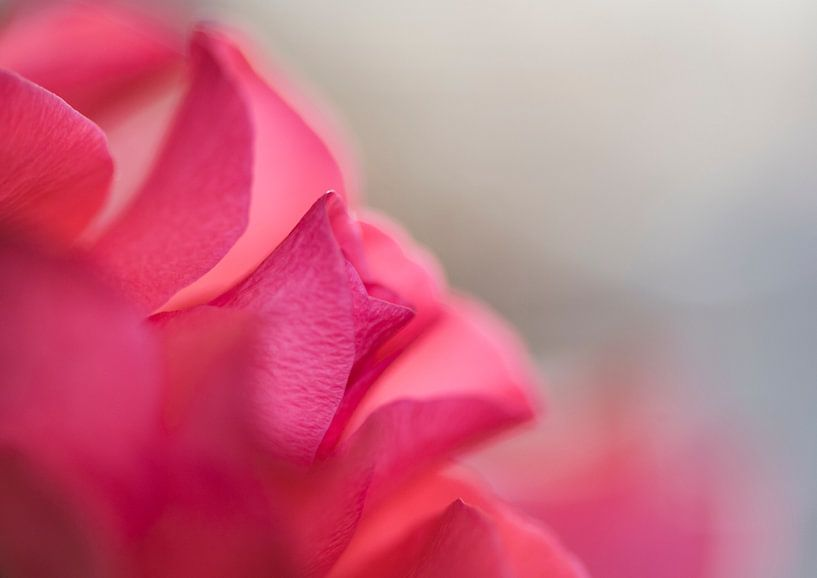Rose Roos om verliefd op te worden van Alex Hiemstra