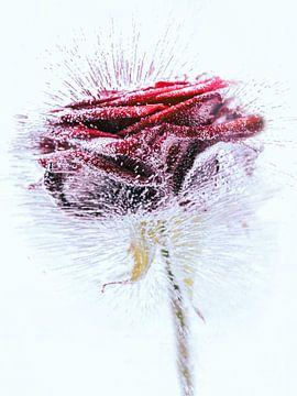 De roos van Fotografie & Digital Art von Margit Lisa Roeder