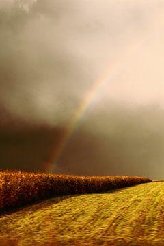 Regenboog boven korenveld van Assia Hiemstra