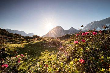 Morgensonne im Sommer Alpen über Wildblumen von Olha Rohulya