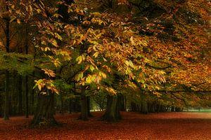 Herfst in het park