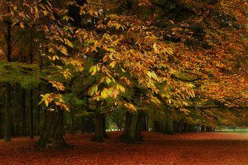 Herfst in het park van