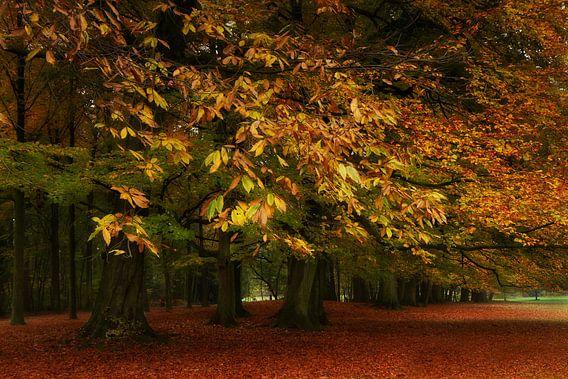 Herfst in het park van Vandain Fotografie