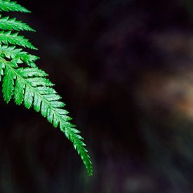 Palmengarten IV van Insolitus Fotografie