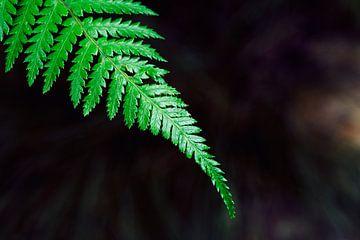 Palmengarten IV von