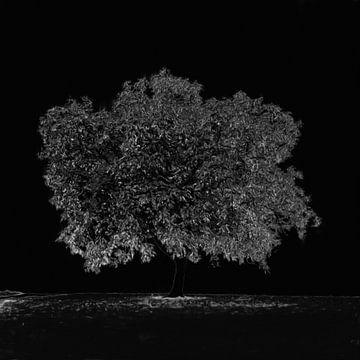 Einsamer Baum von Maurice Dawson