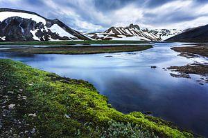 IJslands mos van