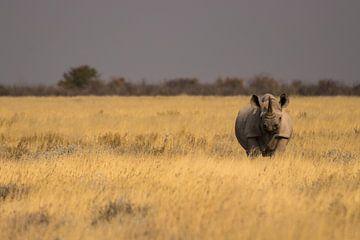 Witte neushoorn op de vlaktes van Etosha, Namibië.