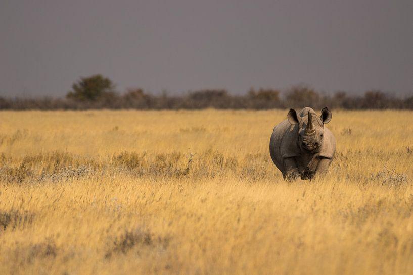 Witte neushoorn op de vlaktes van Etosha, Namibië. van Dennis Van Den Elzen