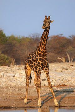 Giraffe bij de waterpoel van Dirk Rüter