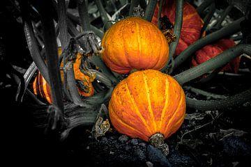 mysterieus fruit van Willem  Overkleeft