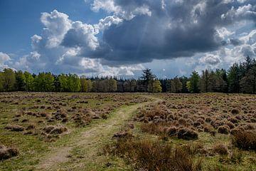 'Rust' in het bos van Martijn van den Hil