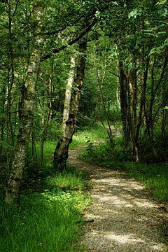 Verschlungene Waldweg von Through My Eyes