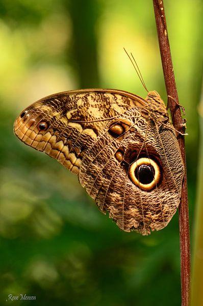 Bruine vlinder von Rene Mensen
