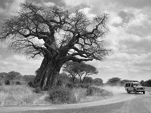 Landrover bij baobab van