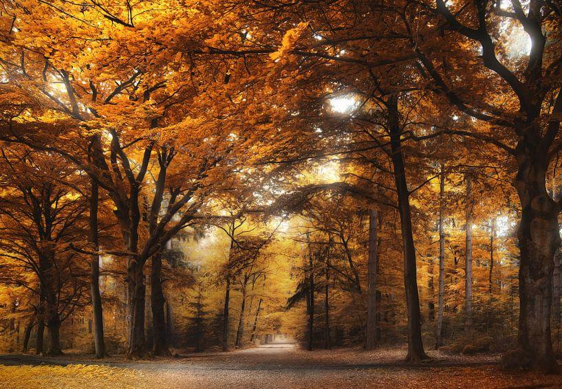 Under the yellow tree van Rob Visser