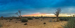 Panorama van de Kalahari woestijn, Namibië van