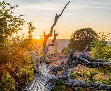 Lever du soleil sur la Veluwe sur Dave Verstappen