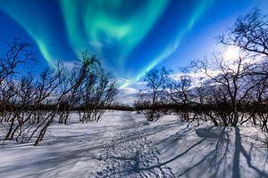Spectaculair noorderlicht gevangen genomen in Abisko, Zweden van Madan Raj Rajagopal