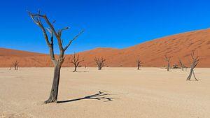 Dead Vlei Namibië van