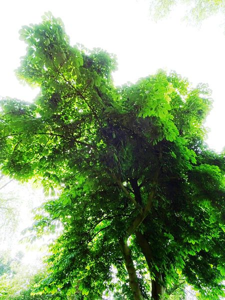 Tree Magic 155 van MoArt (Maurice Heuts)