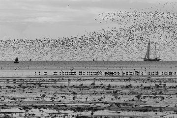 Opvliegende vogels Terschelling von