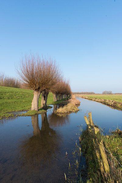 Polderlandschap met knotwilgen en sloot van Jan Pott