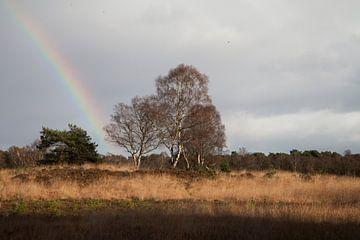 Regenbogen auf der Veluwe von Daan Ruijter
