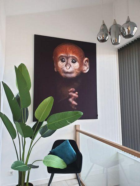 Klantfoto: Baby Langoer aapje van Patrick van Bakkum, op print op doek