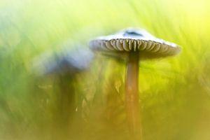Mighty Marvelous Mushroom....