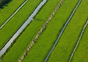 Koeien lopen in een rij terug naar de boerderij van Sky Pictures Fotografie