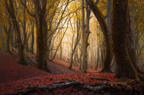 Herfst bomen in het Speulderbos