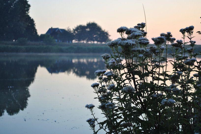Bloemen bij een mooie zonsopkomst van Cynthia Jansen