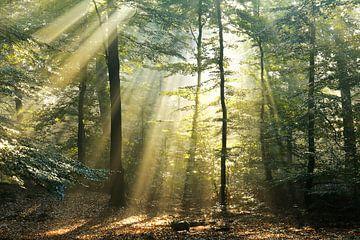 Bos in goud ll van