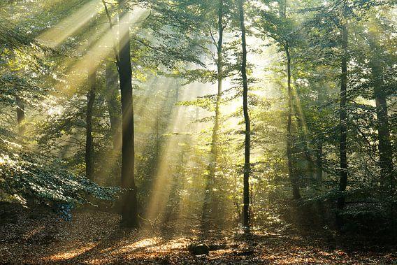 Bos in goud ll