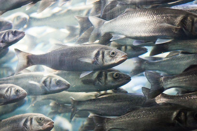 School vissen van Capture the Light