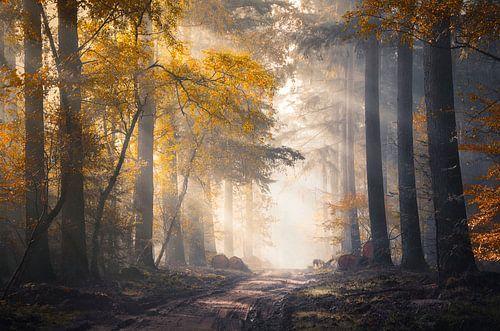 Zonnestralen en herfstkleuren in het mistige Speulderbos