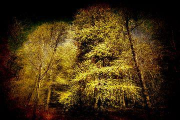 heel erg een boom van Peter Baak