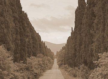 De cipressen van Bolgheri in Italië van Elfriede de Jonge Boeree