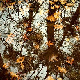 Herfst in spiegelbeeld  / Autumn in mirror image van Cornelis Heijkant
