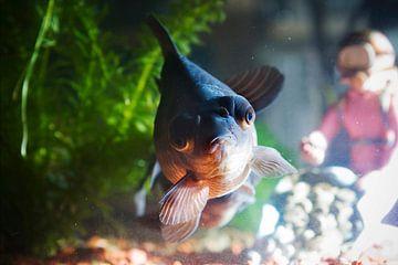 Vis van Gwen Mustamu