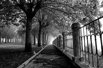 Schwarz-weiße Tiefenperspektive in einem Park mit Bäumen von Bianca ter Riet