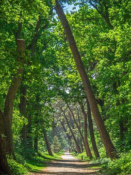Un chemin sous les feuilles vertes