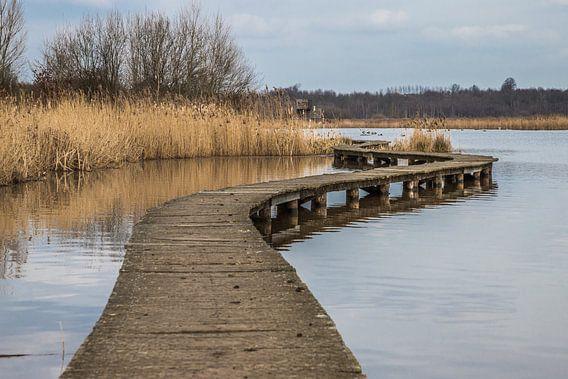 the wooden path van Koen Ceusters