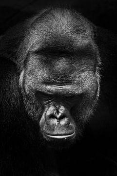 Portret van een enorme krachtige mannelijke gorilla, F zwart-wit fotosymbool van de macht van Michael Semenov