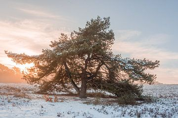 Winter landschap op de heide tijdens de zonsopkomst van John van de Gazelle