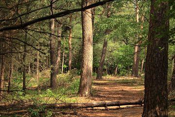 Umgefallener Baum auf Fußweg im Forstamt Dorst'. von Capture the Moment 010