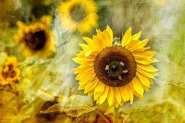 Summer is there - Sonnenblume mit Bienen von Annette Hanl