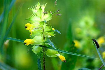 Natur Blumen Atmosphäre Kommissionierung Garten Artenvielfalt von Tuinhappy
