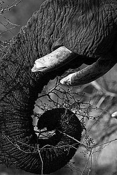 schwarz-weiß von Elefant von Marieke Funke